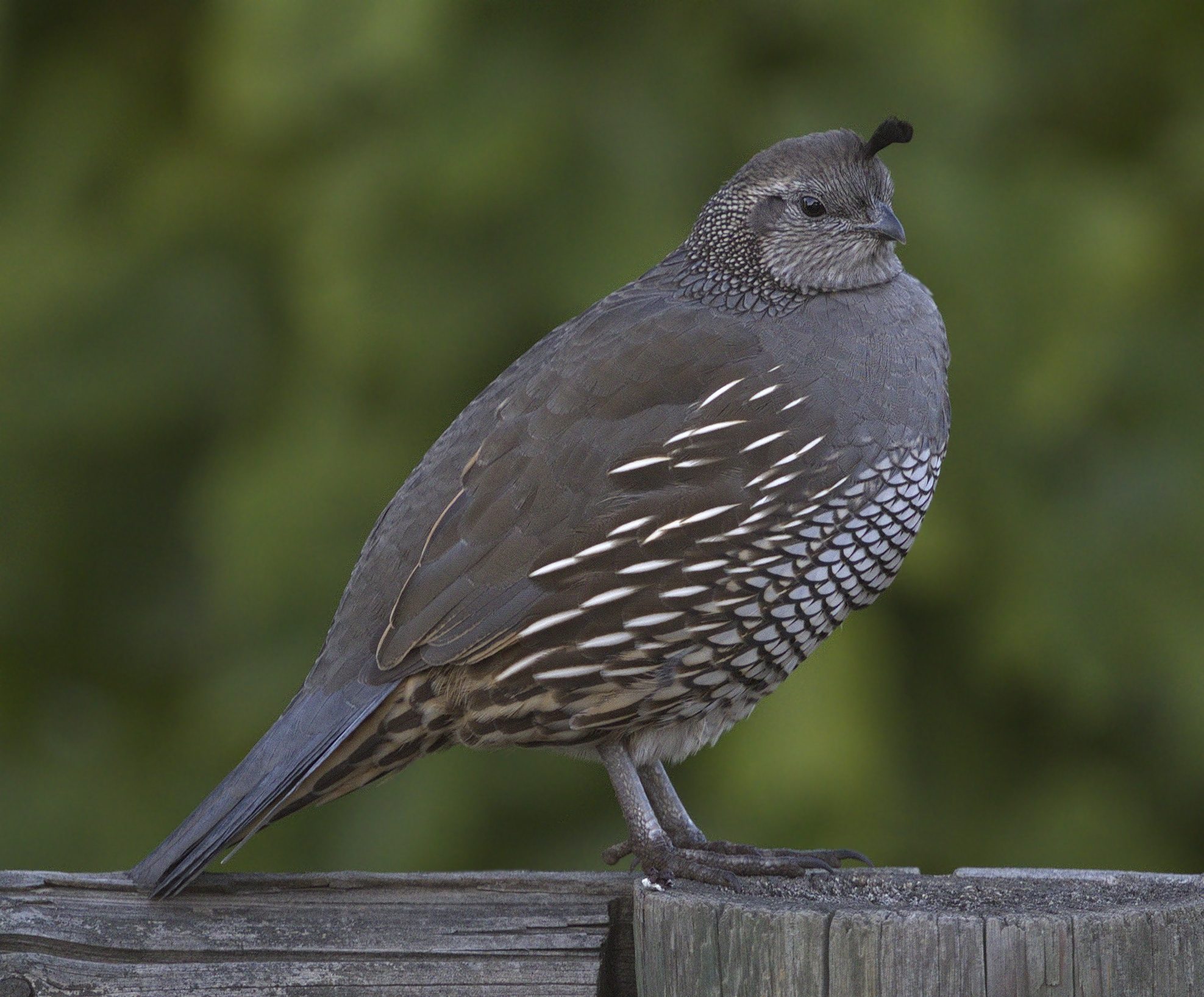 quail chat The quail hollow quarry is a producer of high quality silica glass sand quail hollow glass sand is a key component in the production of glass containers and glass fibers throughout california.