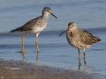 Lesser Yellowlegs with Dowitcher